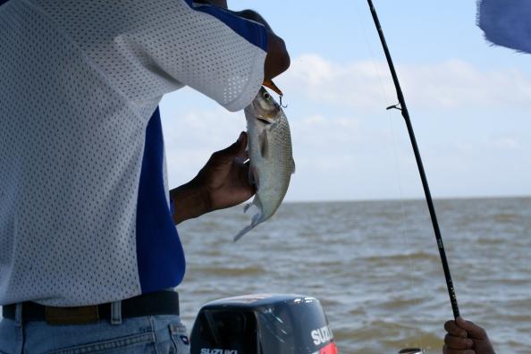 De enige vis van de dag