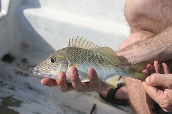 Vangst met de handlijn
