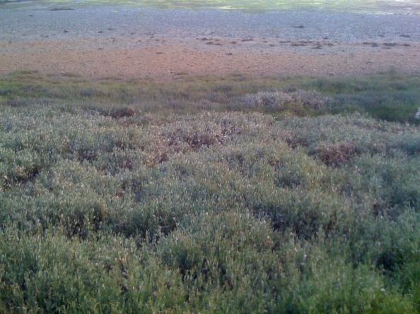 Cap Coz bodem van de baai kleuren IMG_1721