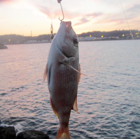 De vis kleurt mooi bij het avondlicht