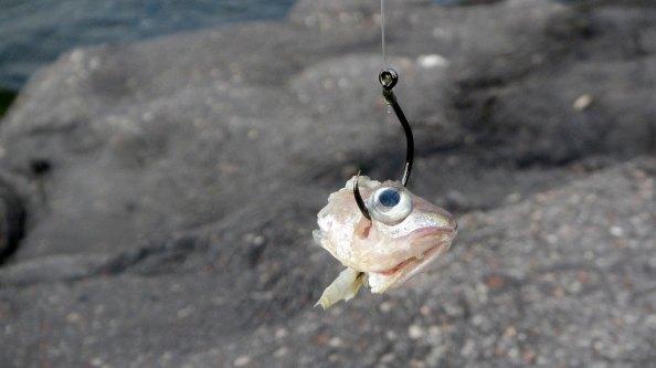 IMG_0812-steenbolkje-voor-de-krabben