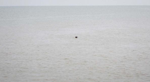 IMG_1114-zeehond-nieuwsgierig