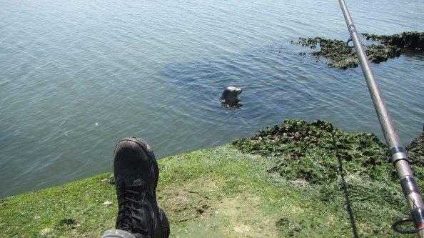 IMG_2299-zeehond-op-de-steen-3