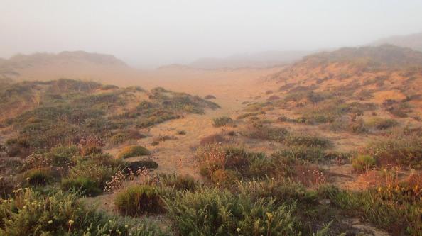 IMG_2470-mist