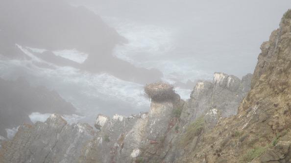 IMG_2535-ooievaarsnest-in-de-mist