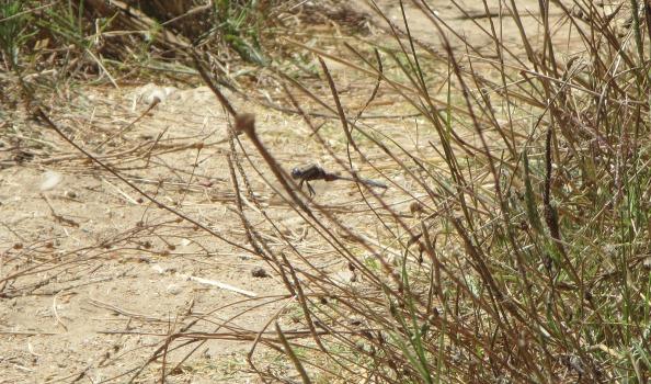 IMG_2659-dragonfly